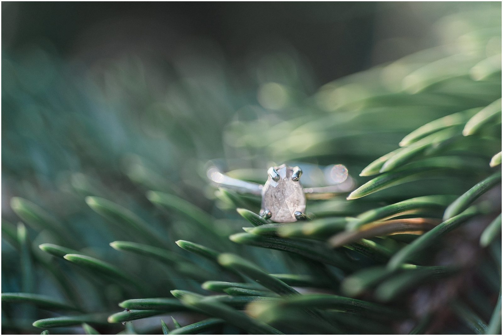 diamond ring in evergreen tree